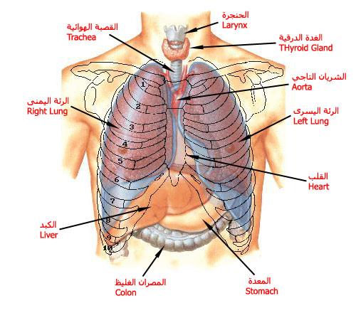 ����� ��� ������� ������ � ������ � ������ � ����� ������ � ������� lung.jpg