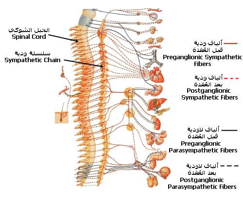 ��������������� ������������������ Nervous System