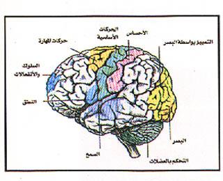 ��� �� ����� ,����� ���� �� ���Seizure,���� ��� �� ����� ,������� �� ����� ������ epilepsy3.jpg
